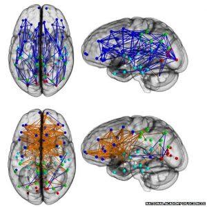 71491129_brainpnas