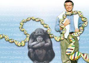 human_primate_dna