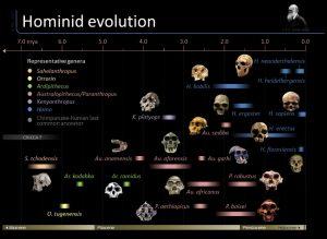 timeline-of-hominid-evolution_517f2065cdb2b_w1500