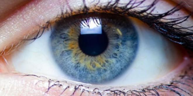 تکامل چشم موجودات زنده