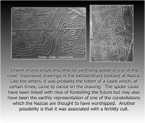 NazcaSpider