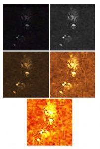 cave-reptilian-alien-analyzed