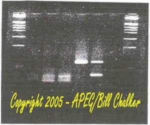 ccr5deletionsequence
