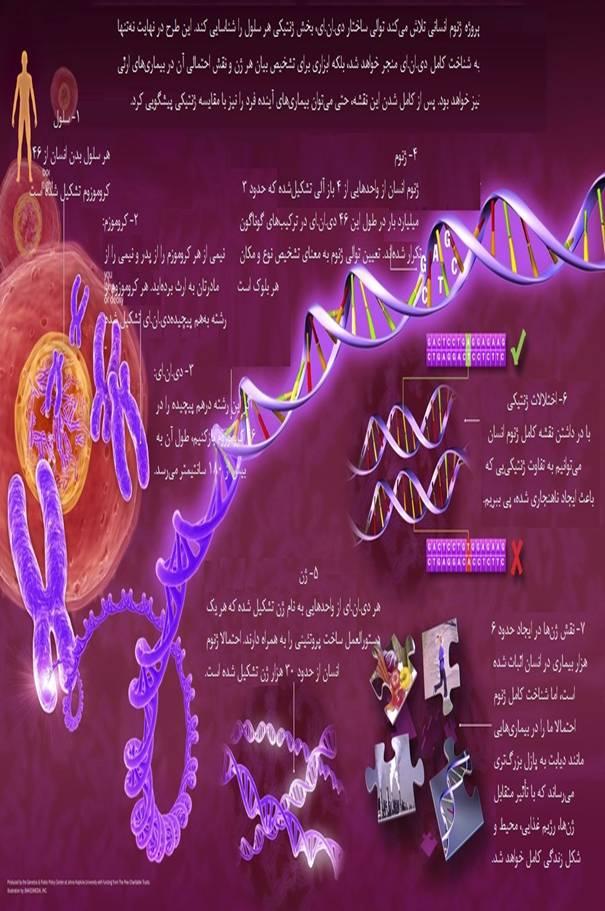 پژوهشی درباره پیشینه DNA ، سومریان و DNA