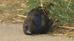 li-dead-bird-wpg-130807