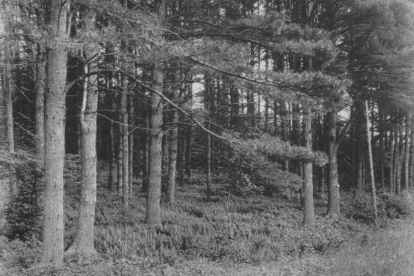 جنگلِ های نفرین شده