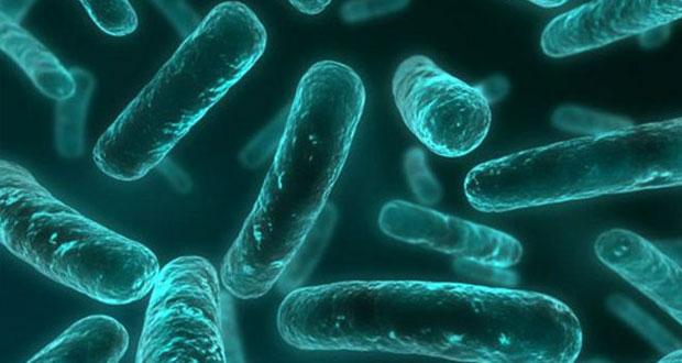 کشف نوعی باکتری که در برابر تمامی آنتی بیوتیکها مقاوم است