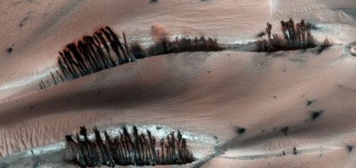 درختان سیاره مریخ