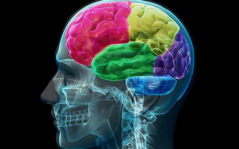 در طول اُرگاسم در مغز چه اتفاقی میافتد؟