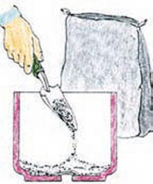 نخل های زینتی