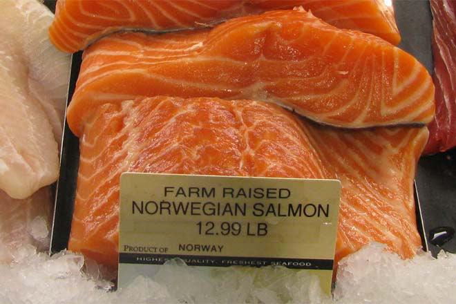 ماهی سالمون پرورشی