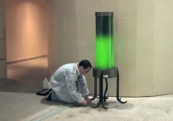 انرژی گرفتن لامپ از جلبک