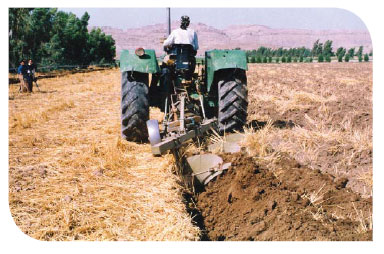 کشاورزی ارگانیک