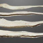 استخوان آلت تناسلی