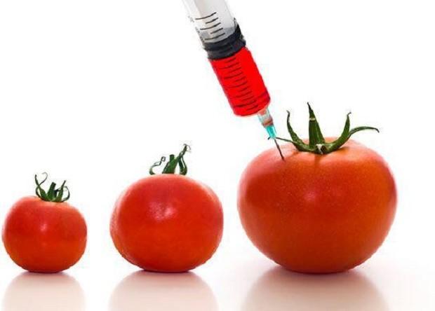 مواد اصلاح شده ژنتیکی