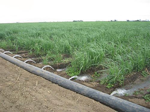 صرفه جویی در مصرف آب در آبیاری