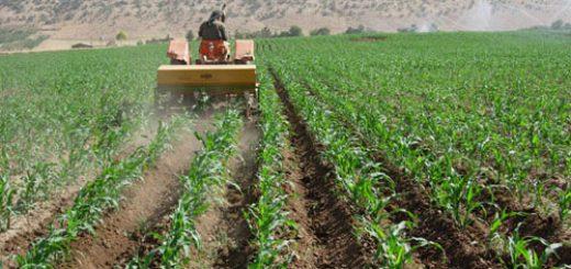 تناوب زراعی