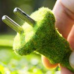 تولید برق از گیاهان زنده