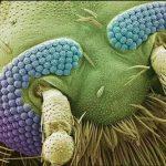 میکروسکوپهای قدرتمند