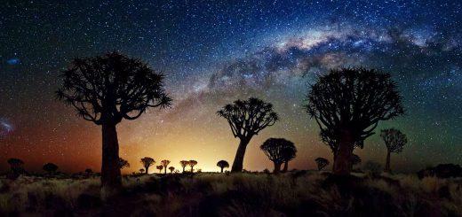 راهشیری تابستانی برفراز عجیبترین درختان آفریقا