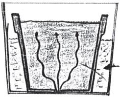 negahdi-kaktos (7)