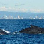 نهنگها و دلفین ها از مرگ هم نوعانشان سوگوار میشوند