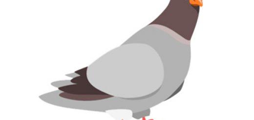 تست هوش: پرواز کبوتر