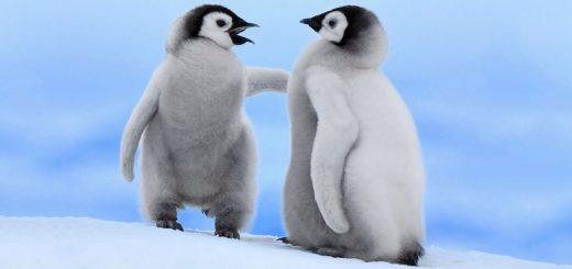 چطور سر صحبت را باز کنیم