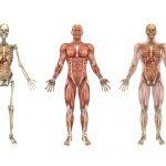 بدن انسان