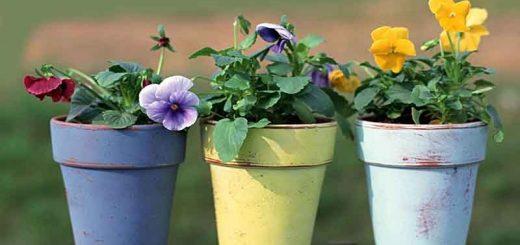 انتخاب گلدان مناسب