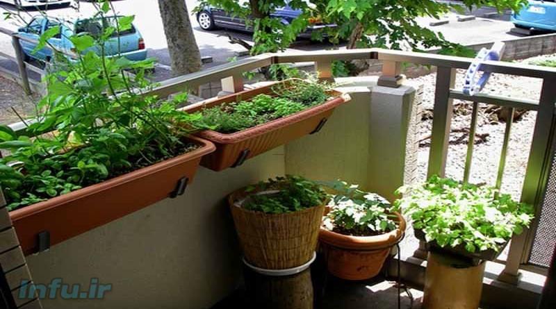 انتخاب گیاه آپارتمانی مناسب
