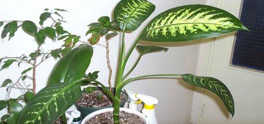 نحوه آب دادن به گیاه خانگی