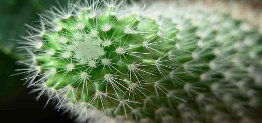 نگهداری از گیاه کاکتوس