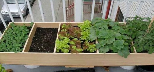 کود دادن به گیاهان خانگی
