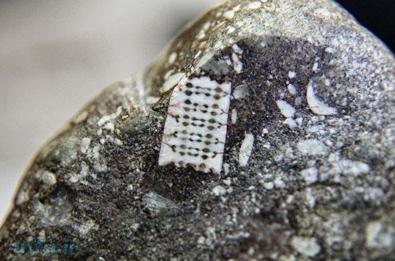 کشف پیچ 300 میلیون ساله