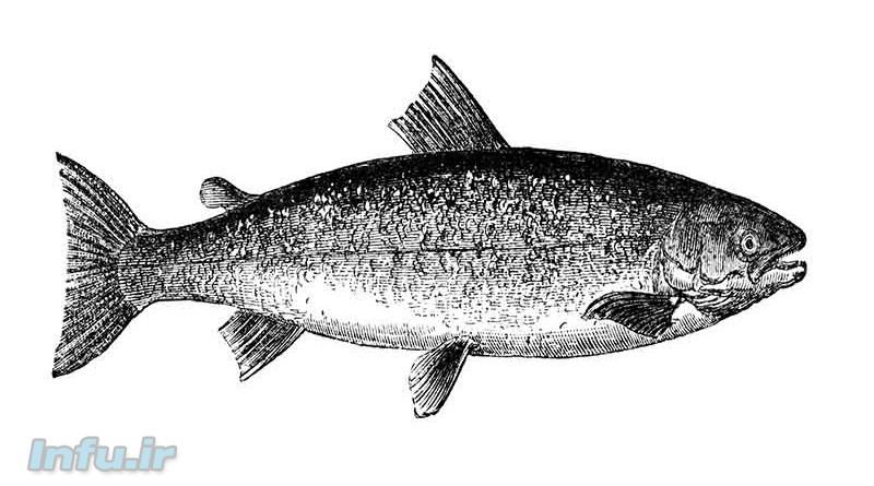 چگونه ماهی را پاک کنیم؟