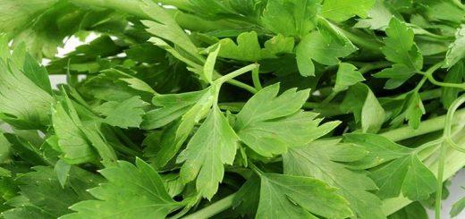 چگونه سبزی ها را بپزیم؟