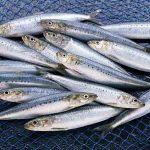 چگونه ساندویچ ماهی کیلکا درست کنیم؟