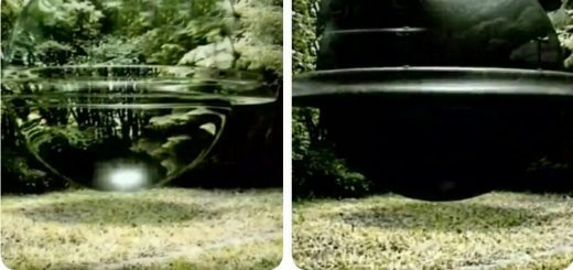 حادثه عجیب در جنگل وودلند