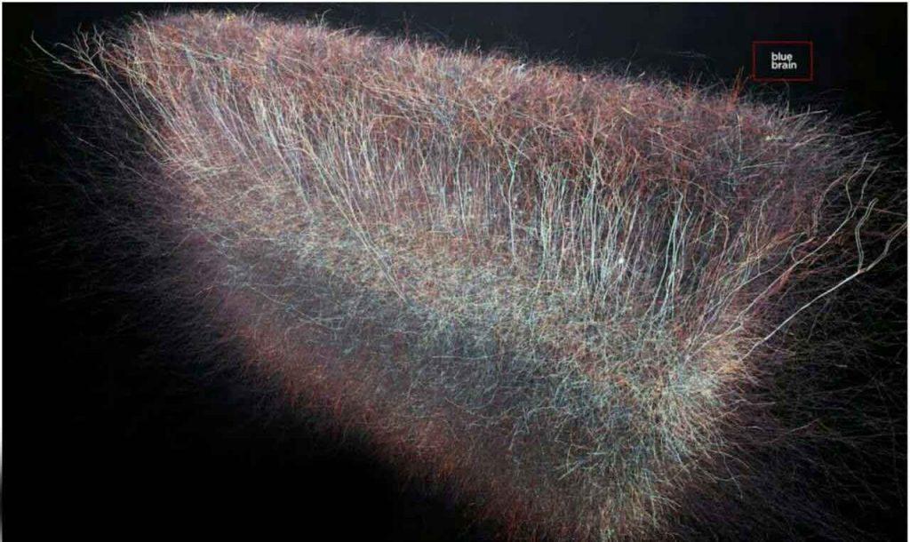 ساختارهای مغز انسان
