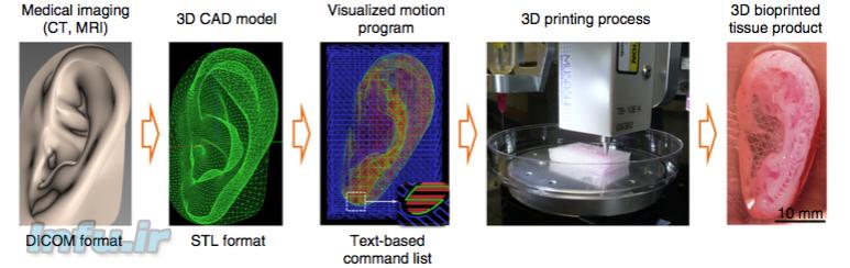 مراحل یافتن مدل دیجیتال بافت اندامی تا پرینت آن توسط بیو-پرینتر با هیدروژل سلولی