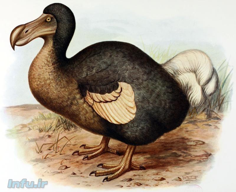 طبق پیشبینیها، دانشمندان قادرند که ظرف پانزده سال آینده، دست به بازسازی پرندهی منقرضشدهای به نام «دودو» بزنند؛ کاری که بهگفته پروفسور هانک گریلی، استاد حقوق دانشگاه استنفورد، با سؤالات اخلاقی عدیدهای روبروست