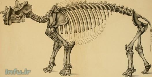 آنتونی د. بارنوسکی: ششمین انقراض بزرگ در راه است