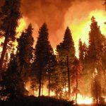 آتش سوزی های جنگلی
