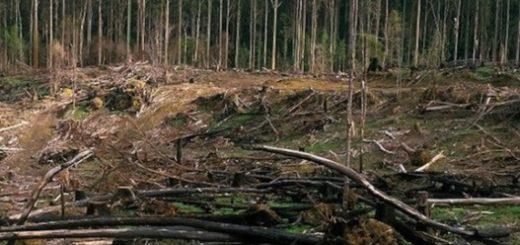 اروپا از چوب درختان محافظتشده به عنوان منبع انرژی استفاده میکند