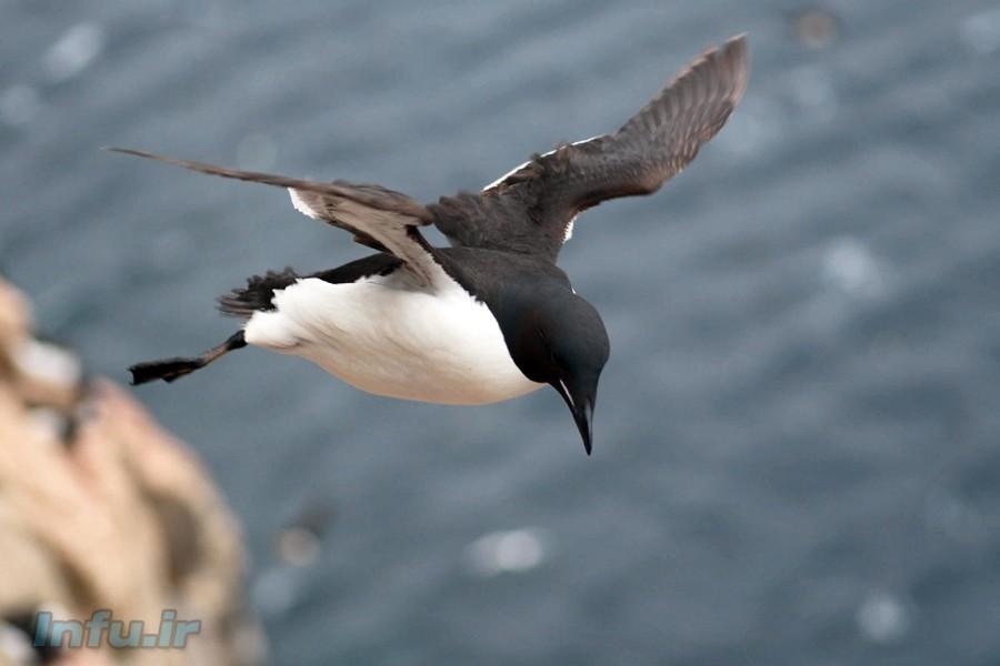پنگوئنها