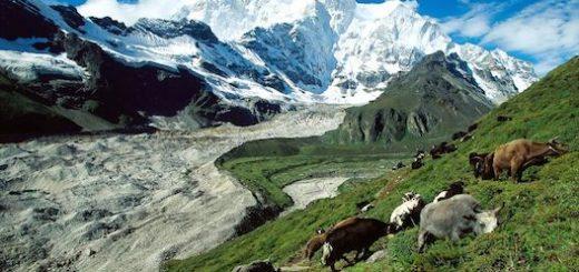 کوهستانهای بدون یخچال