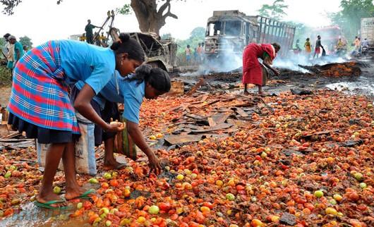 شرق هندوستان: کودکان گوجهفرنگیهای گندیده را از روی زمین جمع میکنند