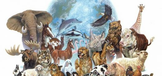 برخی پژوهشگران اعلام کردهاند که تا اواسط قرن پیش رو سی تا پنجاه درصد گونههای کنونی ناپدید خواهند شد