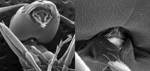 اسکن میکرو-سیتی از مفصل گردن یک مورچه خاکی الگنی